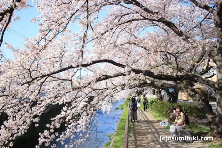 天神川高辻までは土手(縄手)が続くのですが、女性のひとり歩きが目立ちました(2018年3月30日撮影)