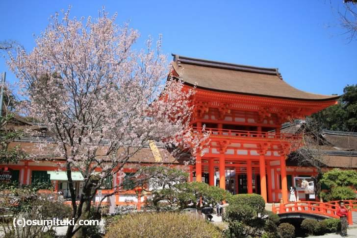境内にある桜の多くが満開をむかえていました