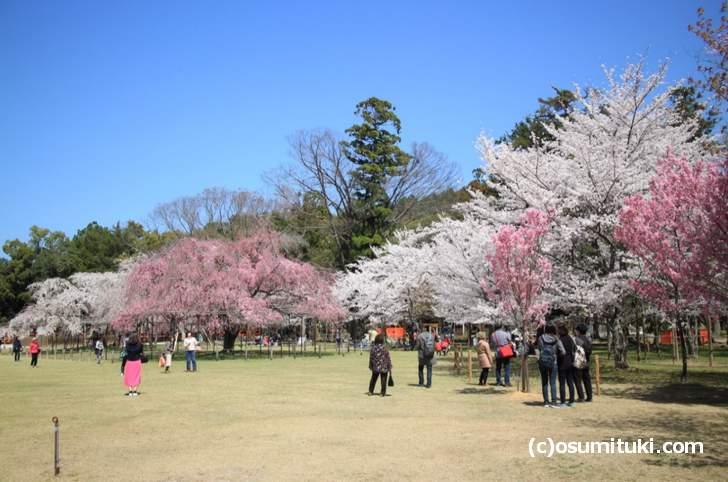上賀茂神社へ行くにはどうすればいいのか