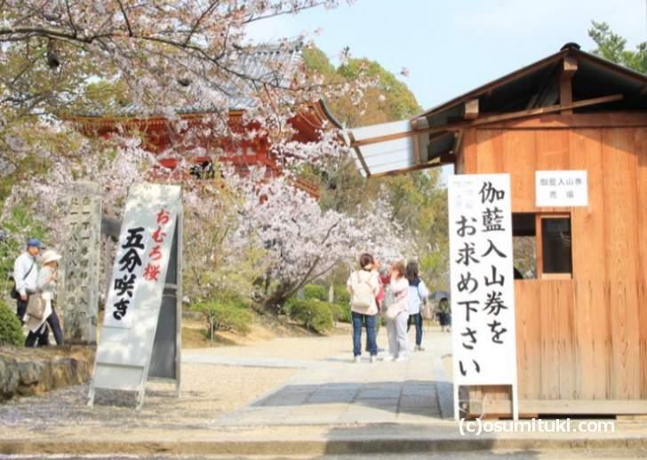2018年4月2日 御室桜(五分咲き)