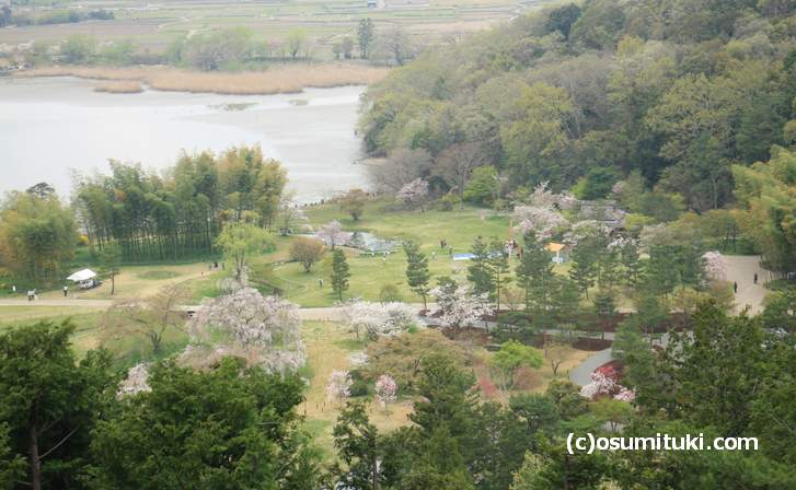 平安郷の桜 2018年4月4日が最後の見頃でした