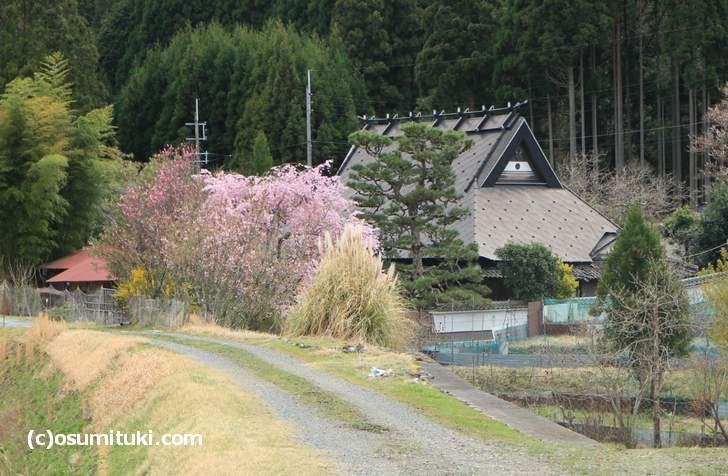 桜が見えるたびに立ち寄っていく単純作業