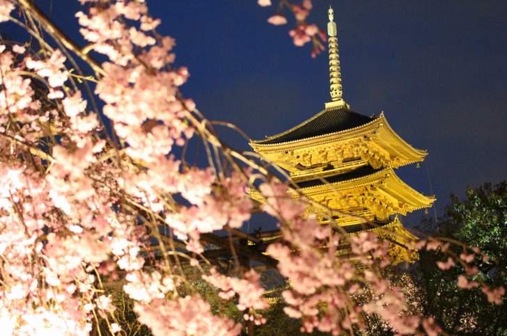 東寺の夜桜ライトアップ