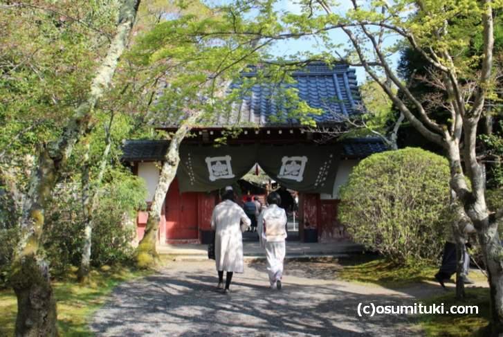 常照寺、すでに桜は終わっていますが、本来なら桜を見ることができるお寺です