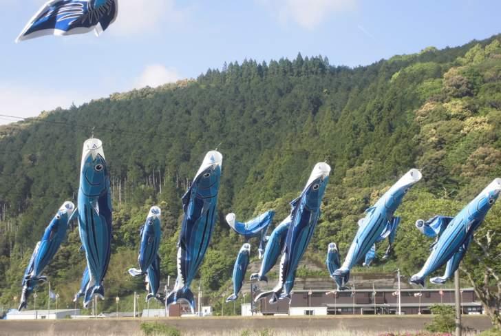 ともこ工房は高知県幡多郡黒潮町にあります。写真は黒潮町の名物「カツオのぼり」