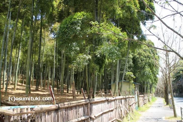 洛西ニュータウンにある広大な竹林