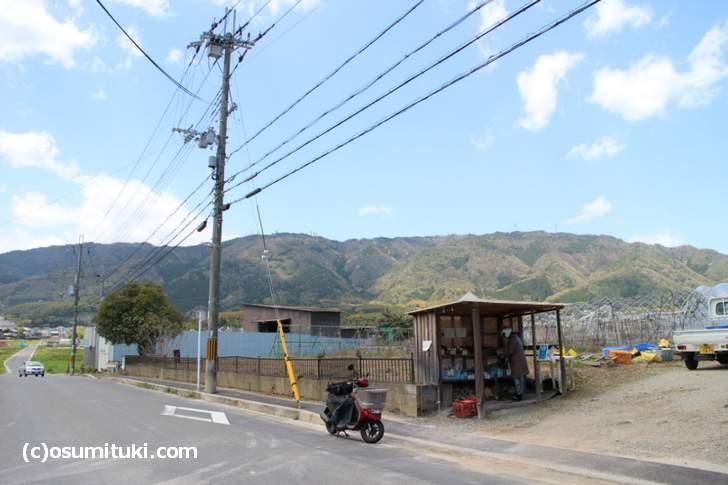 京都の西山地区では、3月下旬~4月まで朝採り竹の子が無人販売されています