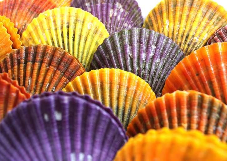 カラフルな色を持つ珍食材「ヒオウギ貝(ひおうぎ貝)」