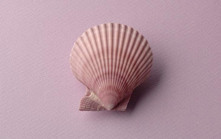 販売用にキレイに洗浄された「ヒオウギ貝」
