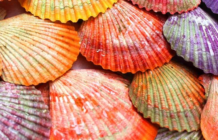 「海藻」や「フジツボ」など付着したものを洗浄するとキレイなヒオウギ貝になります