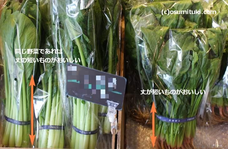 とう立ちした野菜とは成長して伸び切っている野菜のこと