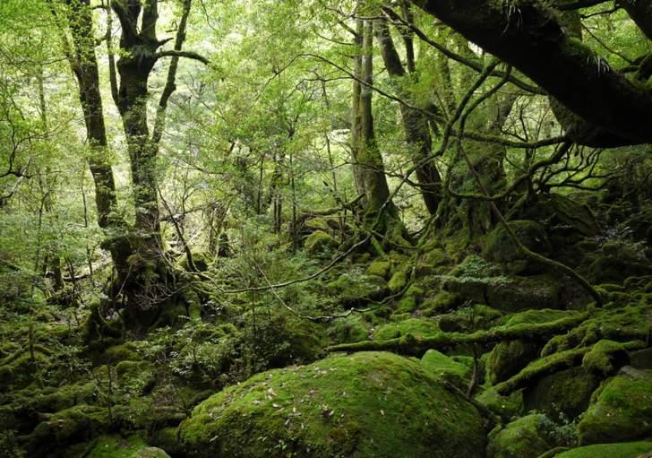 日本の自然「原生林」は生態系のバランスを保っていました