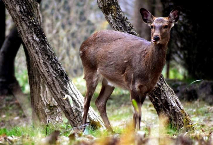 草の多い山には鹿が多い、それはエサがあるから