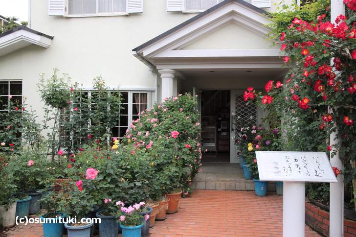 ばらCafe ラビアンローズ 敷地内にはたくさんのバラが育てられています