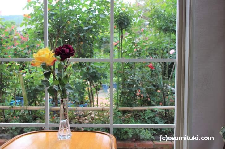 カフェの準備ができるまで敷地内にあるたくさんのバラを見て待ちます
