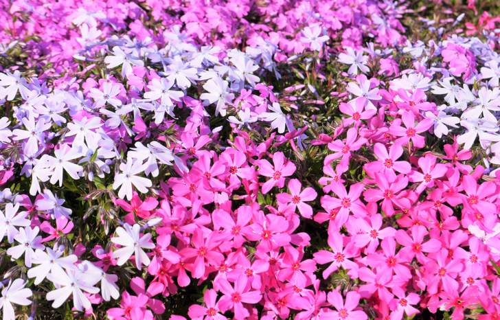 今週の『人生の楽園』で佐賀・嬉野市で夫婦が作る無料のフラワー園「志田フラワー園」が紹介されます