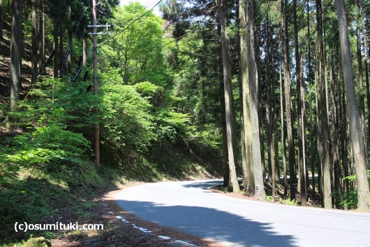京都バス・花背線「花背高原バス停から別所上の町」へ向かう山道
