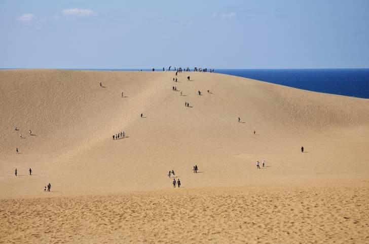 広大な鳥取砂丘でラクダに乗って写真撮ったことがあります