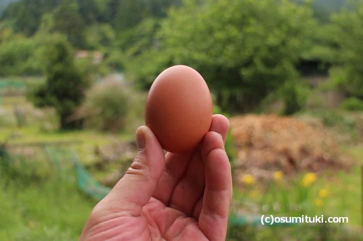 有精卵 野たまご いったいどんな卵なのか
