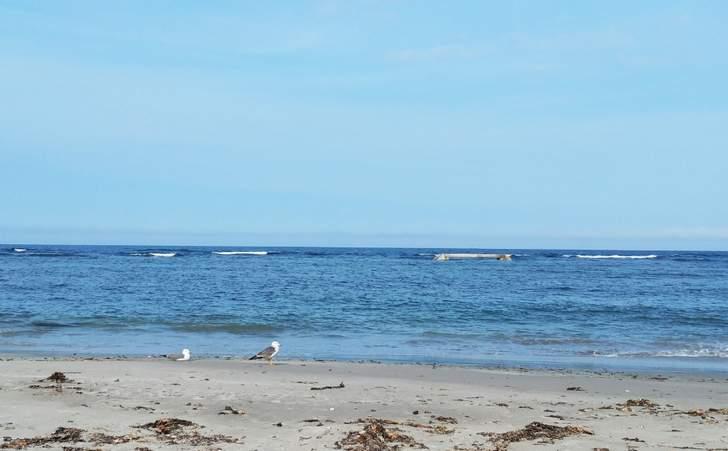 洋野町種市付近の海は深さ約3メートル~5メートルの浅瀬