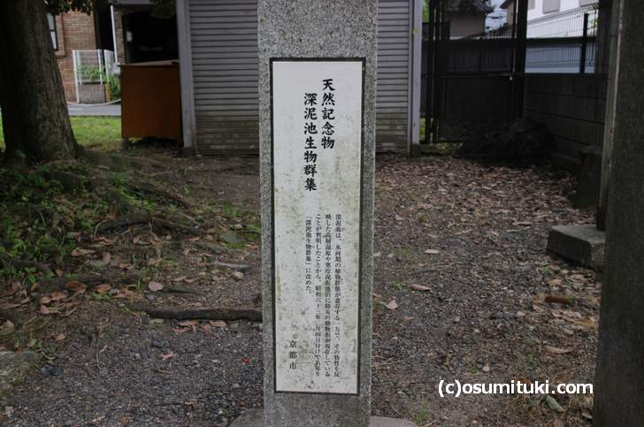 深泥池は昭和63年2月4日付けで正式名称を「深泥池生物群集」としている