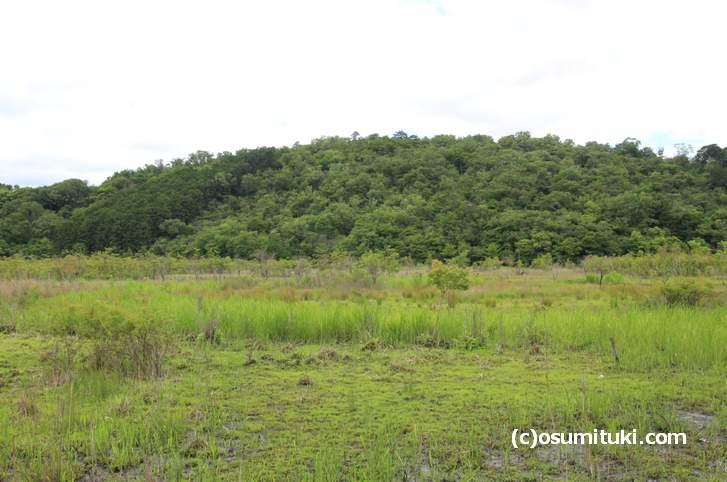 深泥池の東にそびえる「大豆島」
