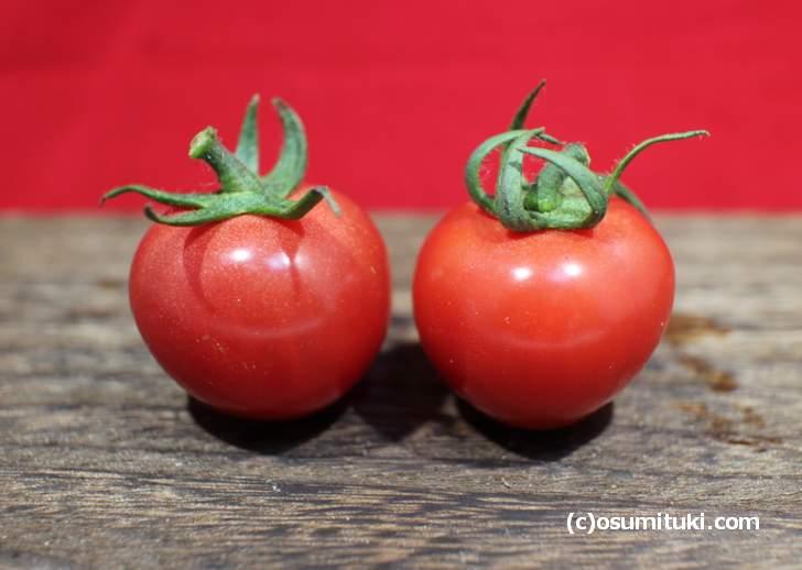 「ミニトマト、プチトマト」のサイズは2センチから3センチくらいです
