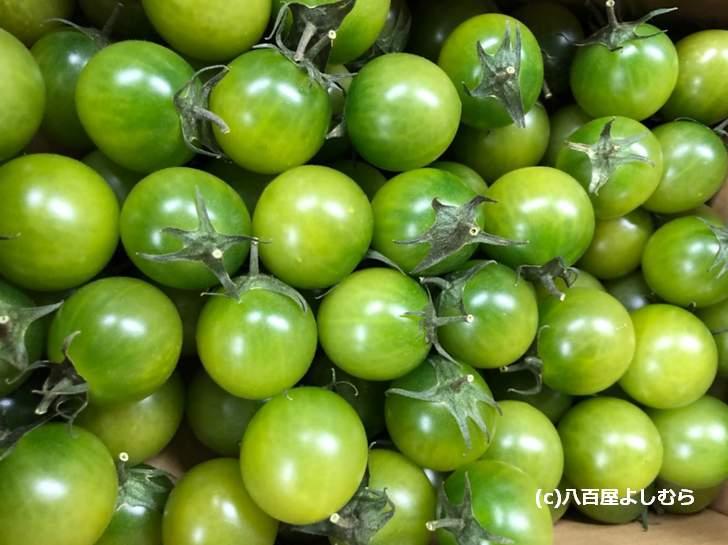 間引きトマトではなく緑色の品種です