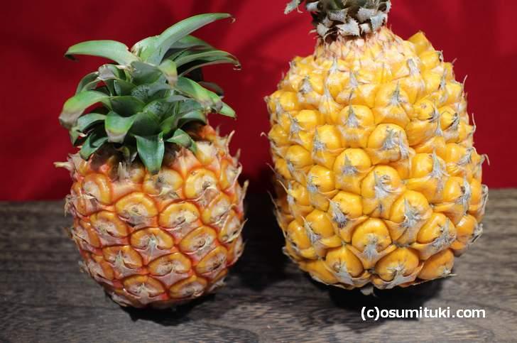 石垣島のパイナップル(左:ピーチパイン、右:ボゴールパイン)