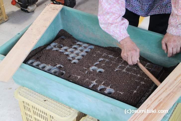 今回の「西日本大豪雨」では作物自体が根本的にダメになったので苗づくりからやり直しです