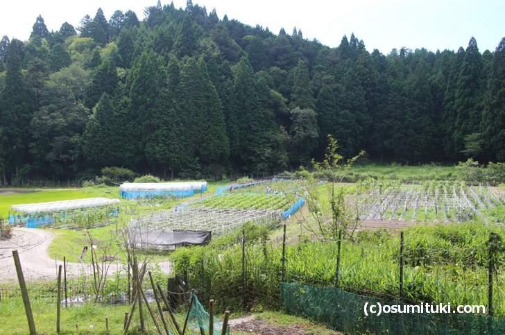 京都の秘境「百井」がNHK『えぇトコ』で紹介されるそうです