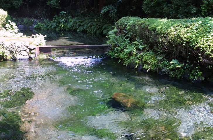 すぐ近くの「名水 白川水源」