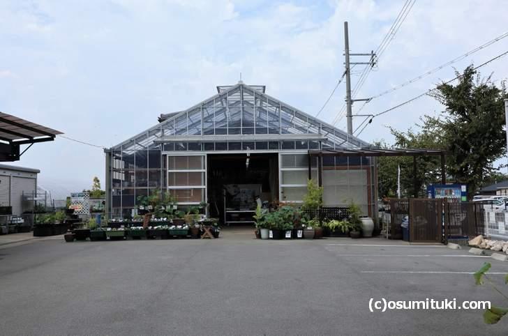 文化パルク城陽の近くにある水生植物専門店「杜若園芸(とじゃくえんげい)」さん