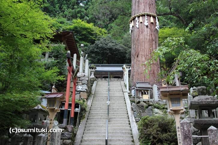樹齢800年の御神木「大杉さん」