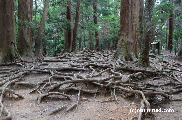 木の根道(鞍馬寺)