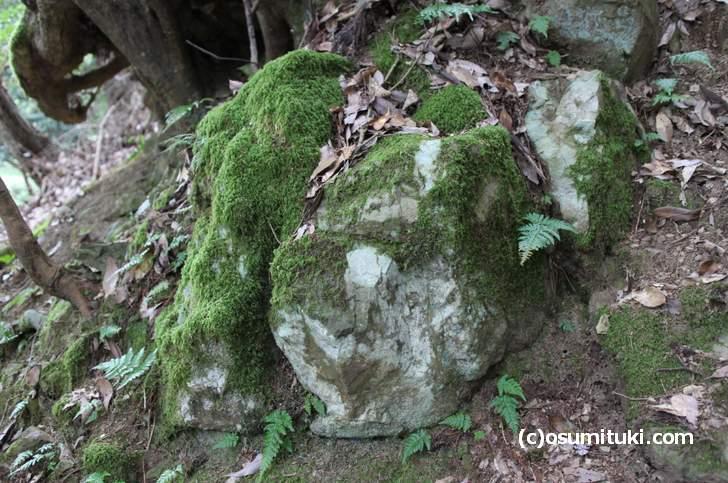 中生代ジェラ期の白い砂岩(鞍馬寺)