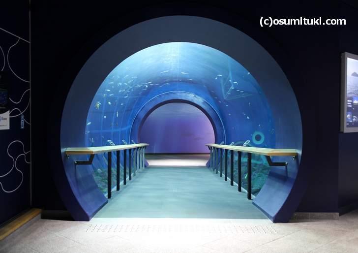 ビワマスとブラックバスを両方「見たり、食べたり」できるのは琵琶湖博物館