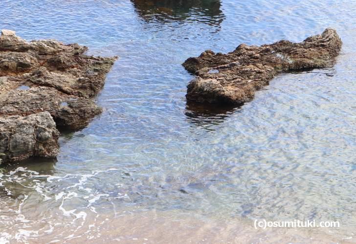 若狭湾の透明度はピカイチです!