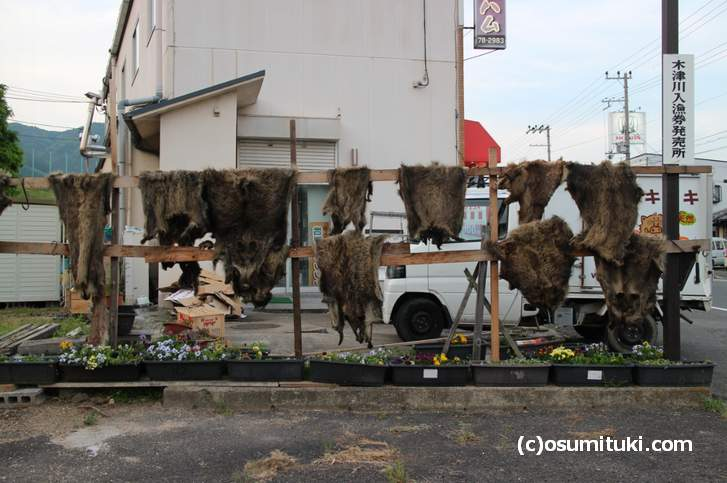 猪肉を取った後の革を干す風景(2018年5月1日 宇治田原町で撮影)