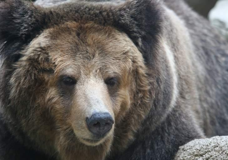 言うほど見かけない野生動物「クマ」