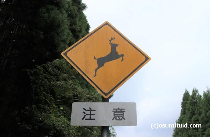 よく見る「シカ注意」の交通標識、でも本当にいるの?
