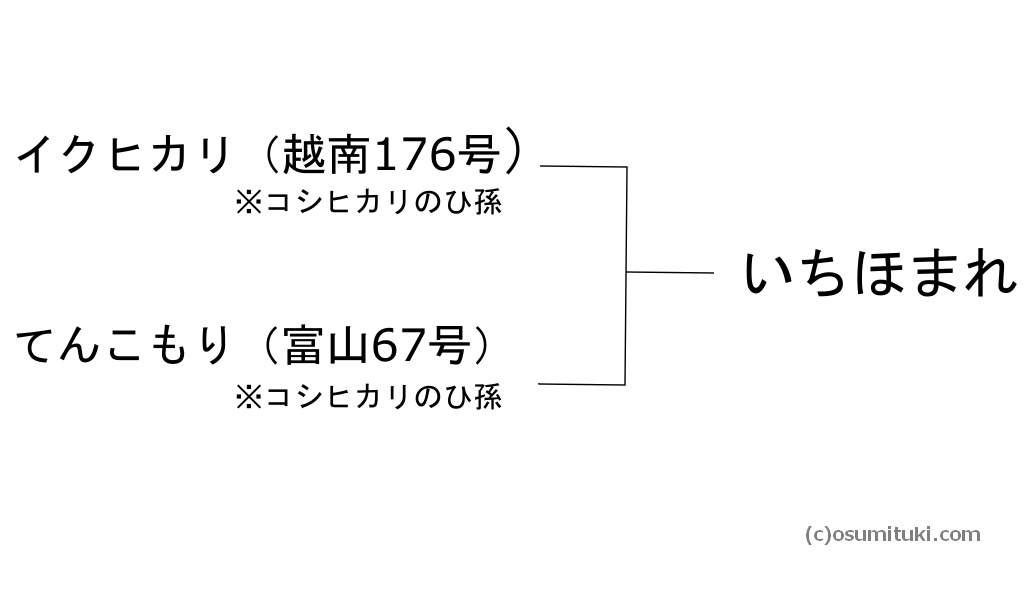 いちほまれ(越南291号)系譜