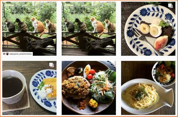 里山カフェ そらいろのたね (出典:Instagram)