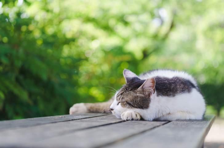 ウッドデッキに猫が集まるカフェ
