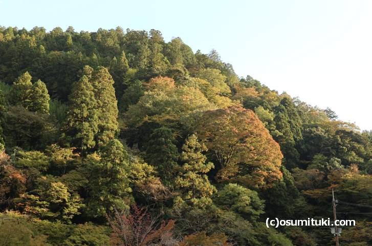 京都「高山寺」付近の紅葉(2018年10月29日撮影)