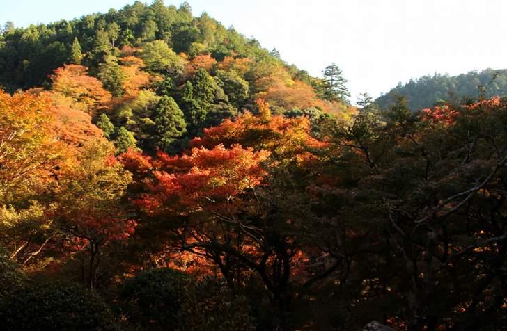 高山寺の紅葉(ピーク時)