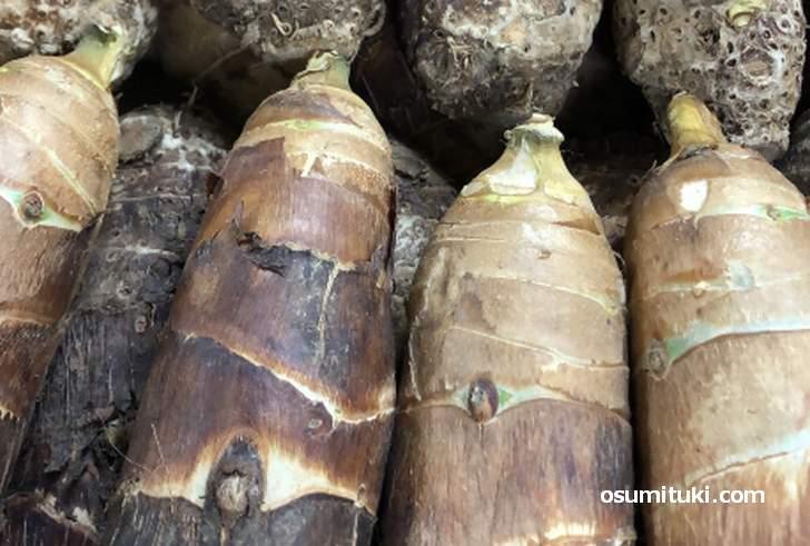 「媛かぐや」は「京芋(たけのこ芋)」と京都の「海老芋(唐芋)」を交配させた新品種