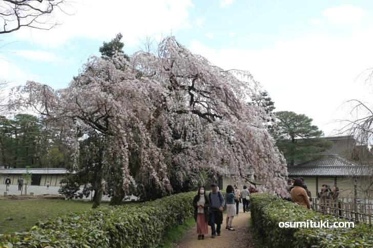 24時間、誰でも入れる「京都御苑」は憩いの場となっています