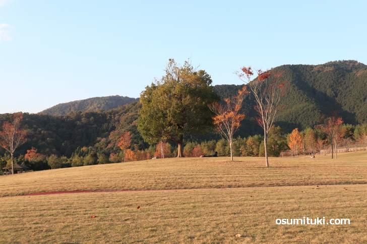 三段池公園の紅葉、奥に見える烏ケ岳付近は秋の雰囲気です(2018年11月10日)