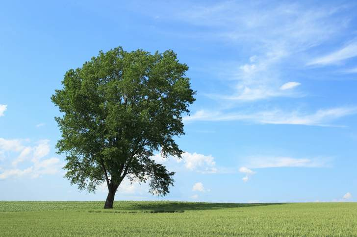 哲学の木(北海道美瑛)